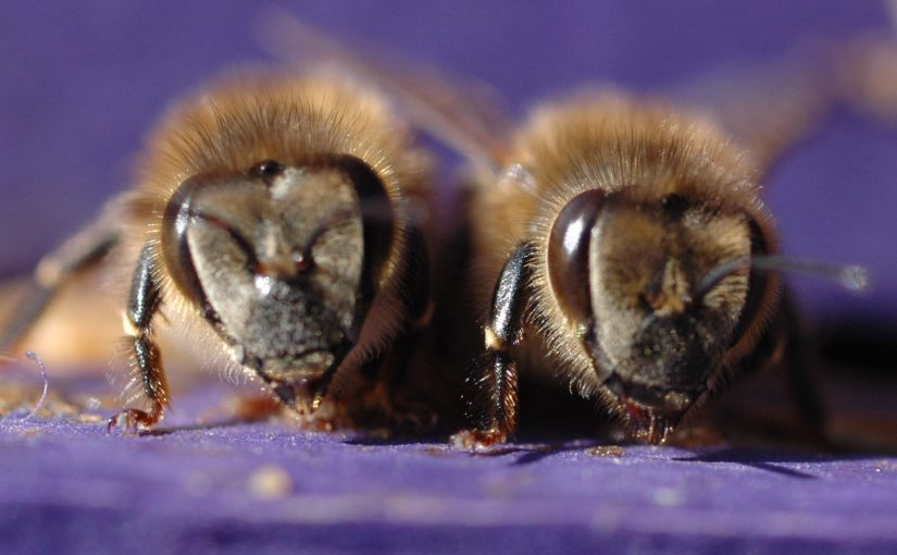 The bees are arriving!